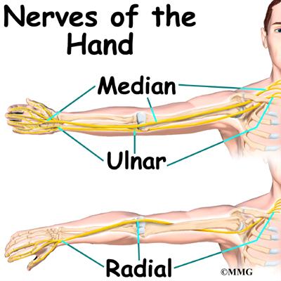 hand nerves diagram mechanical wave anatomy eorthopod com