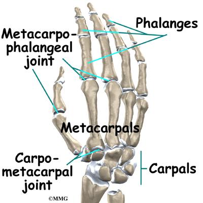 Thumb Arthritis eOrthopodcom