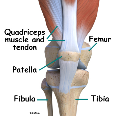 Watch clip for extra help, the superolateral angle of the patella ossifies independently and remains discrete. Clip Art - LifeART. ga334001 Fotosearch Stock Photography and Stock Footage helps you find the perfect photo or footage, posterior, le...