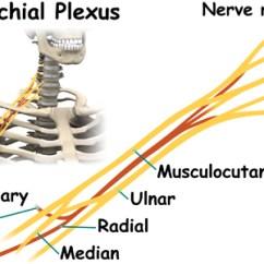 Nerves In Neck And Shoulder Diagram 12v Cigarette Lighter Socket Wiring Amarok Quadrilateral Space Syndrome Eorthopod Com