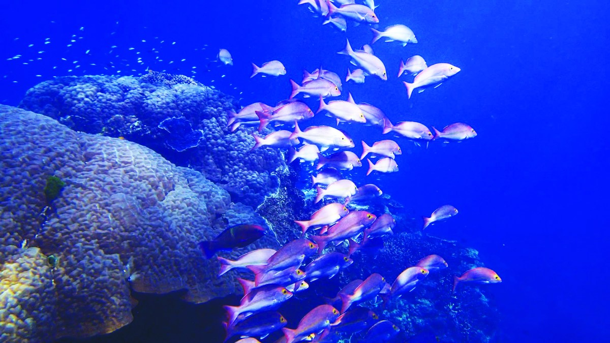 Ocean acidification in the Great Barrier Reef