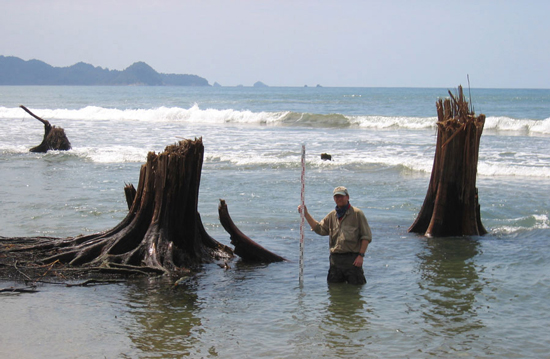 A scientist investigates dramatic subsidence along the northwest coast of Sumatra in January 2005.