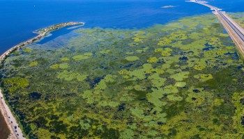 Aerial image of reeds and duckweed in reservoir
