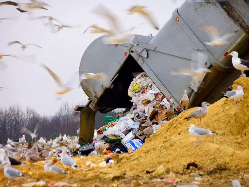 A landfill in Maryland's Eastern Shore attracts seagulls