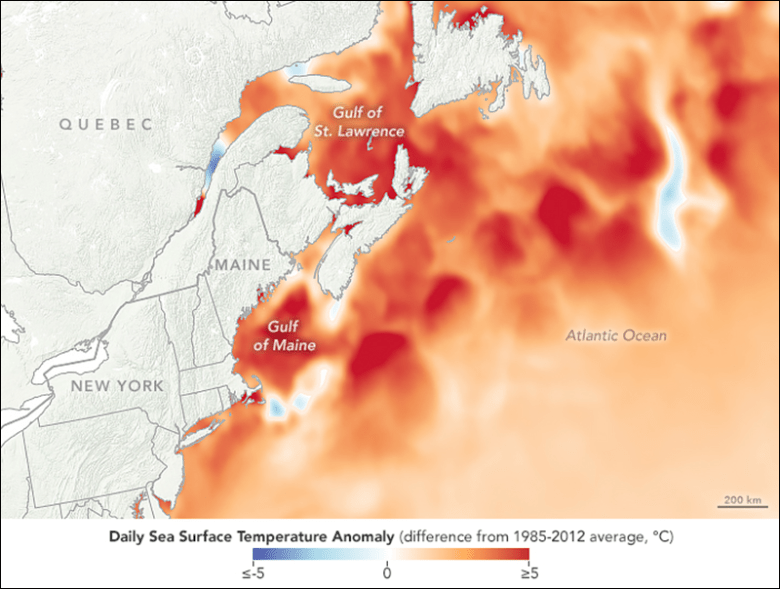Data showing anomalous heat in the Gulf of Main