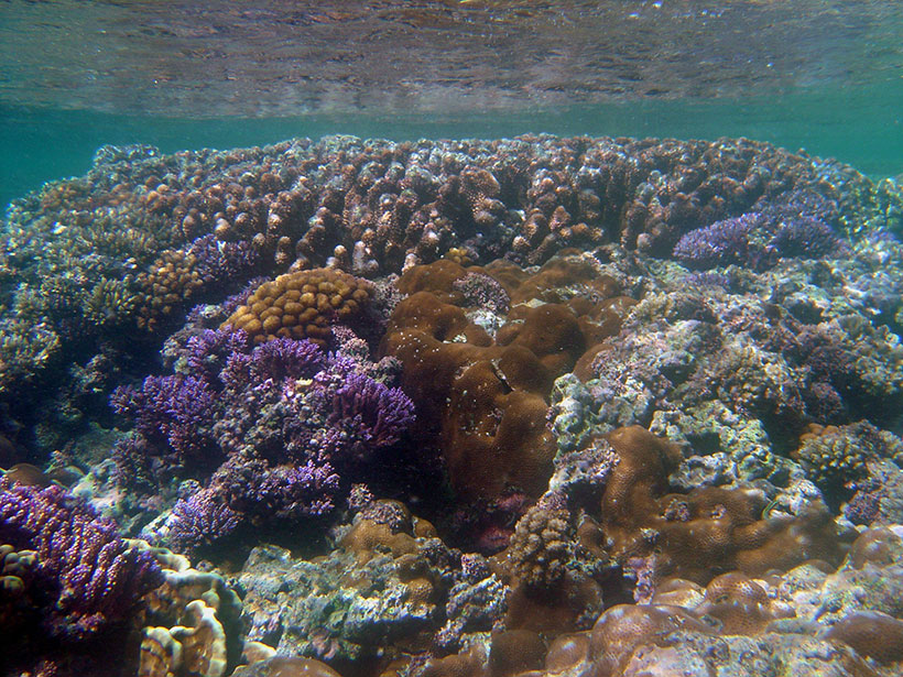 A shallow coral reef at low tide near the Mariana Islands and Guam