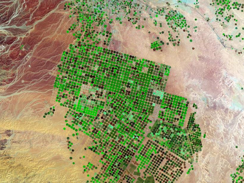 Satellite image of irrigation in the desert