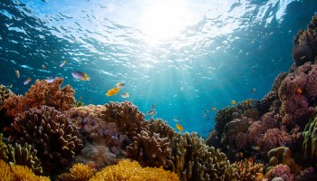 Underwater photo of coral and fish