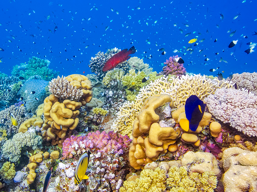 Underwater photo of a brightly colored coral reef with fish swimming