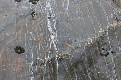 Quartz filled fractures in slate, Antarctica