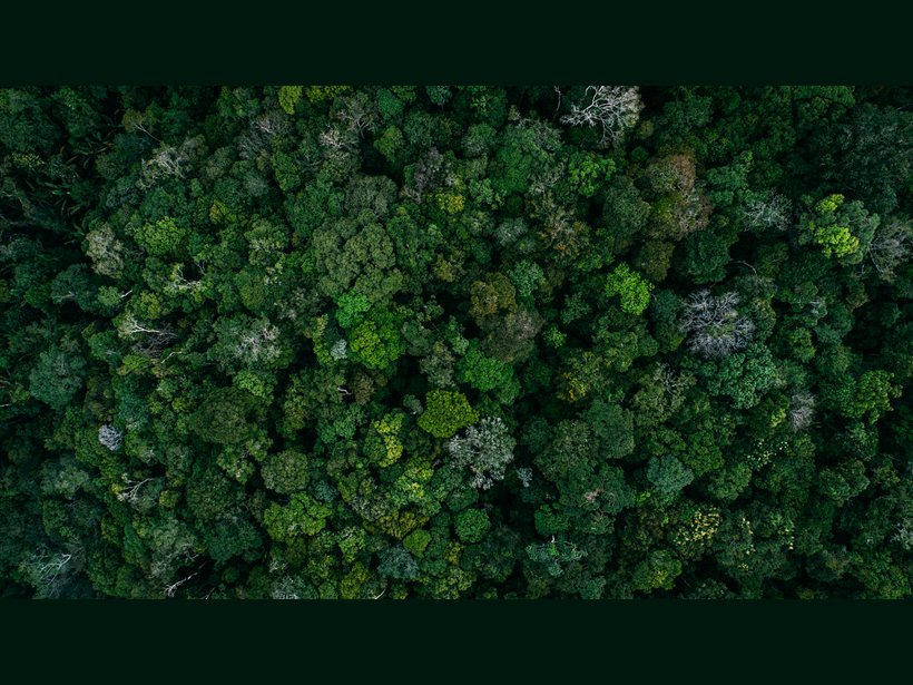 Bird's-eye image of the tree canopy in an intact section of the Brazilian rain forest