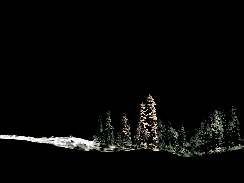 Side view of individual trees generated in a lidar image