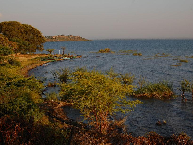 Lake shoreline with vegetation at sunset