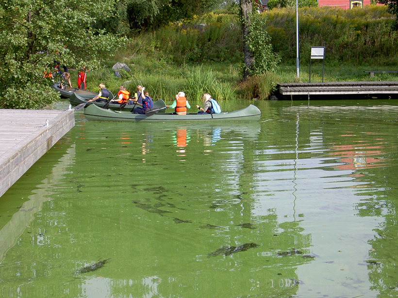 An algal bloom covers the surface of Lake Vansjø in Norway near the shore as children board canoes.