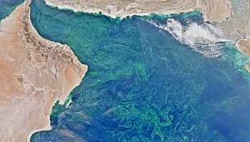 Swirls of photosynthetic algae thrive in the Arabian Sea in February 2015.