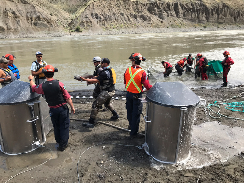 A crew in safety vests uses nets and holding tanks to rescue salmon from the Fraser River