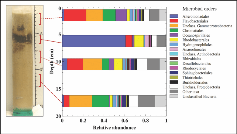 Figure showing the relative abundance of microbes in a sand core with a pronounced oiled layer
