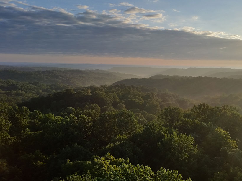 A canopy view of Morgan-Monroe State Forest in southern Indiana