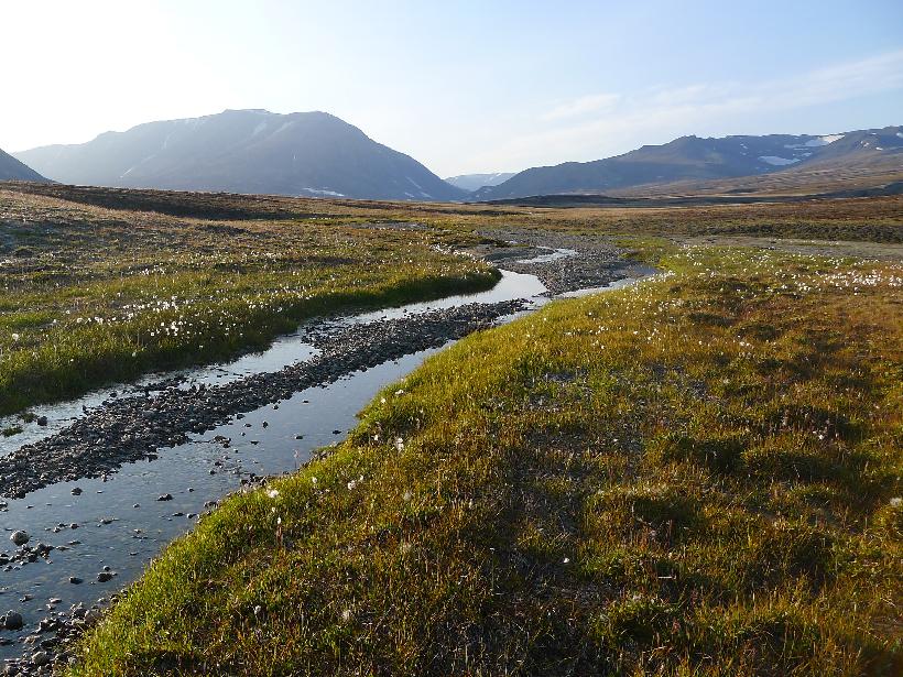 A stream in the Zackenberg Valley of northeastern Greenland