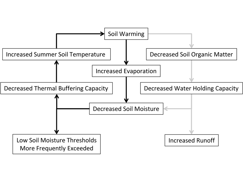 Schematic showing hypothesized feedbacks of soil warming, the ability of soil to buffer warming, and the amount of water soil can hold