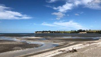 Shoreline view in an estuary in northeastern New Zealand