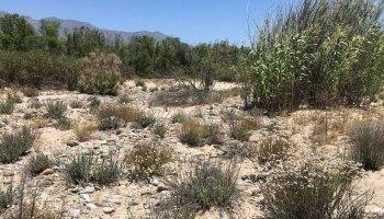 Dry, vegetated landscape near the Santa Clara River in California