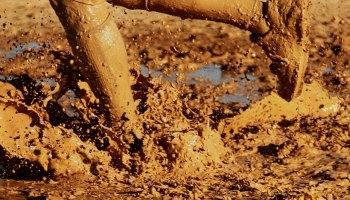 Close-up of mud-encrusted legs running through a muddy field