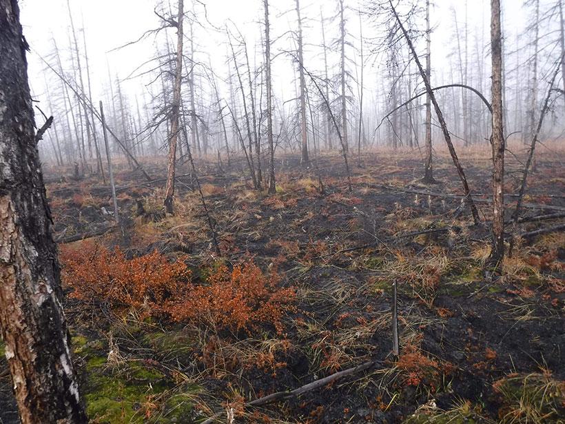 Burned shrubs, bare trees.