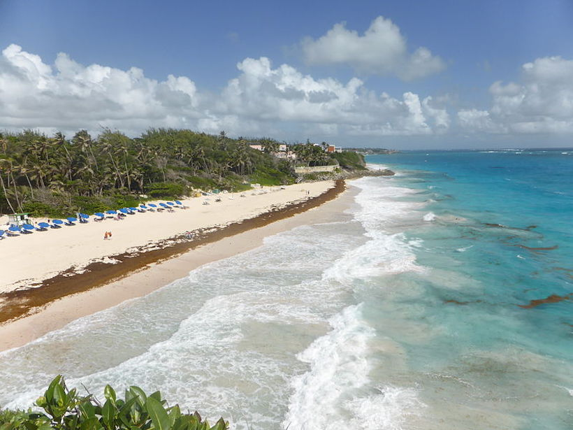 Aerial photo of brown seaweed lining an entire stretch of a beach in Barbados