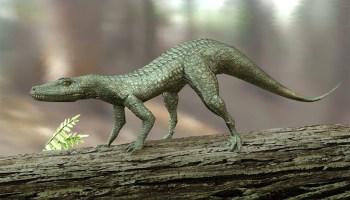 A 3D computer illustration of Hesperosuchus, an extinct genus of crocodylomorph reptiles