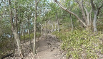 Trail in a dry forest on Saint Lucia