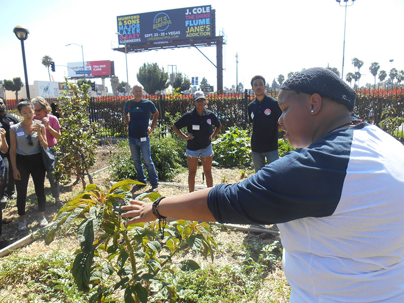A youth farmer in Los Angeles County gives a tour of an urban farm
