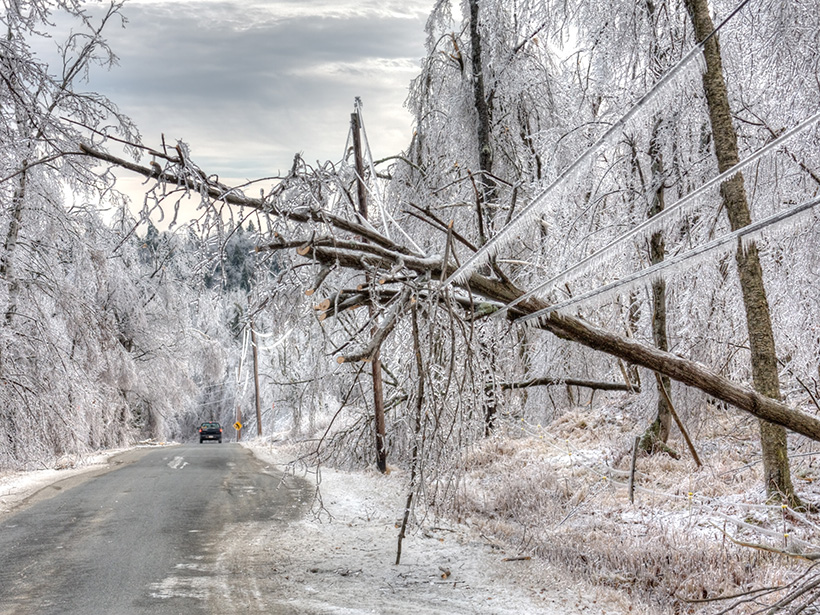 Ice-covered trees line a road.