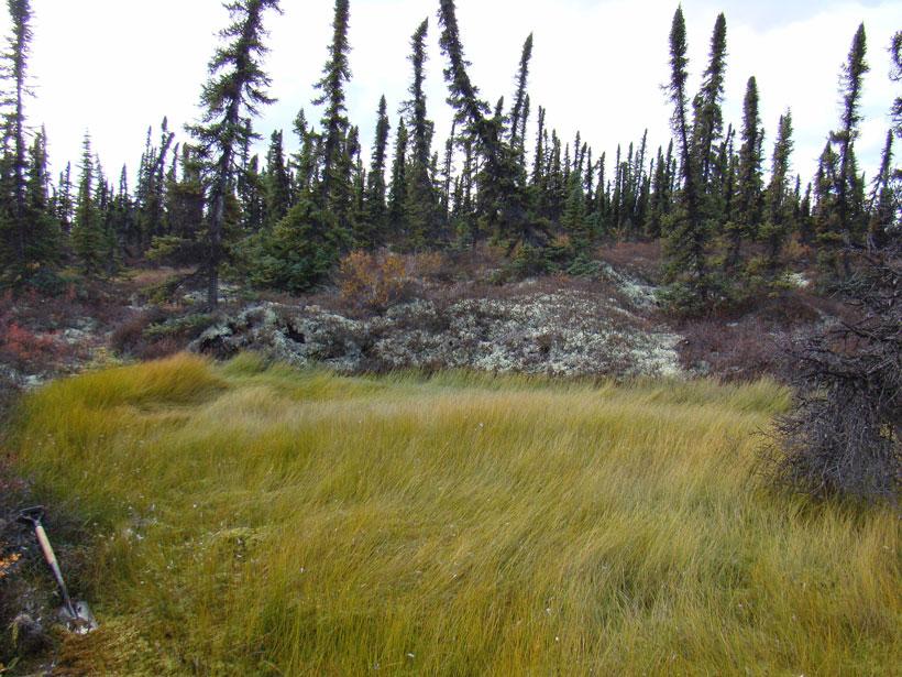 Thawing permafrost on various peatlands in Alaska