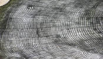 英国布里斯托动物园一种未知树种的生长年轮图片