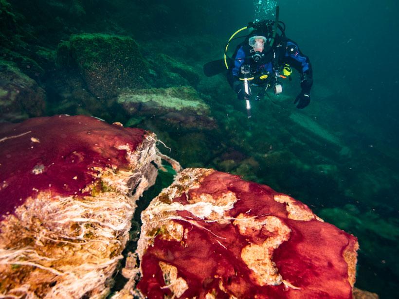 Un buzo se acerca a roca cubierta con tapetes multicolores de bacterias.