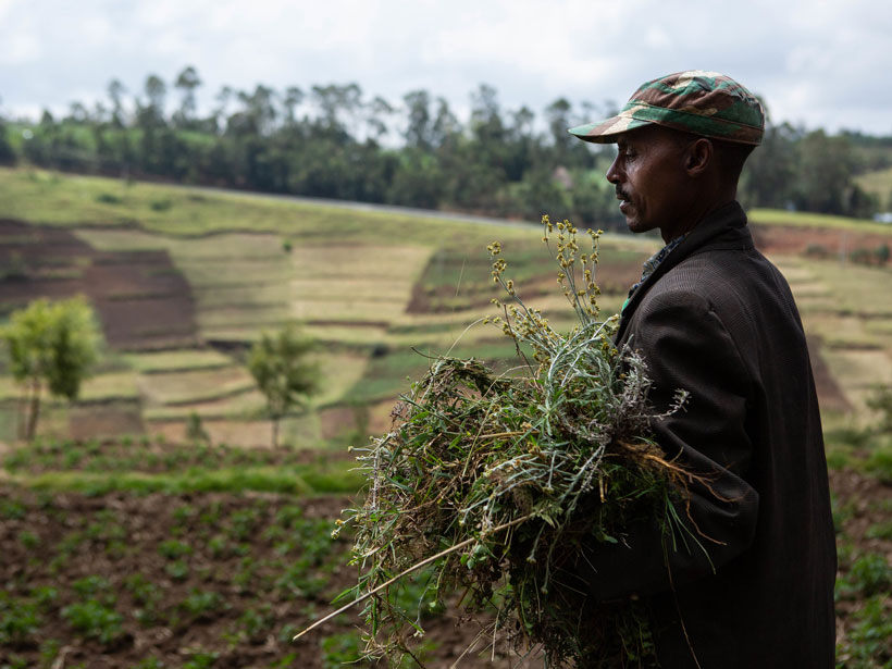 A farmer carries forage for his mule in southwestern Ethiopia.