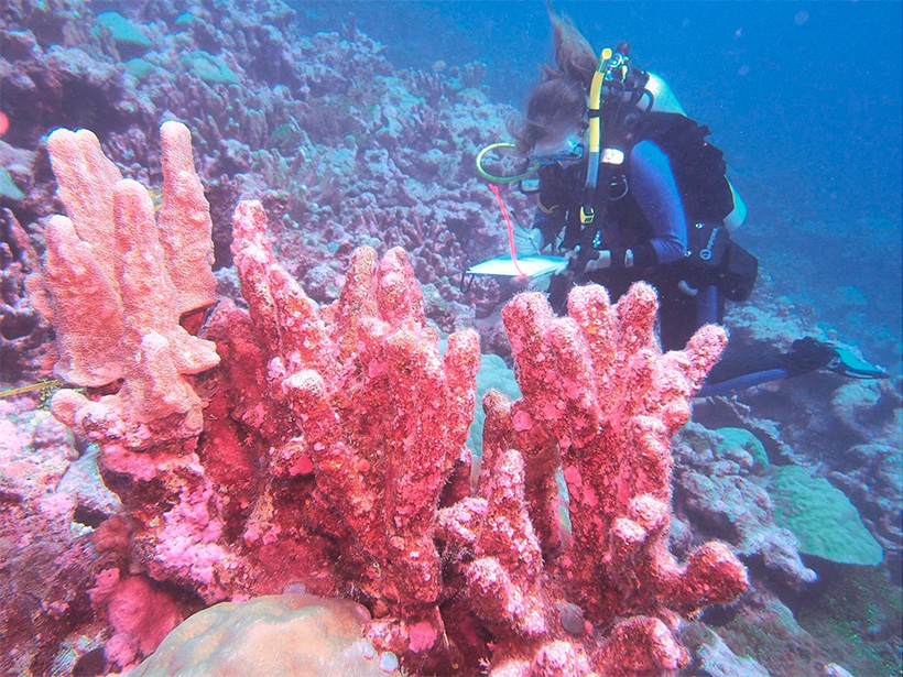A scuba diver records data next to a large pink coral.