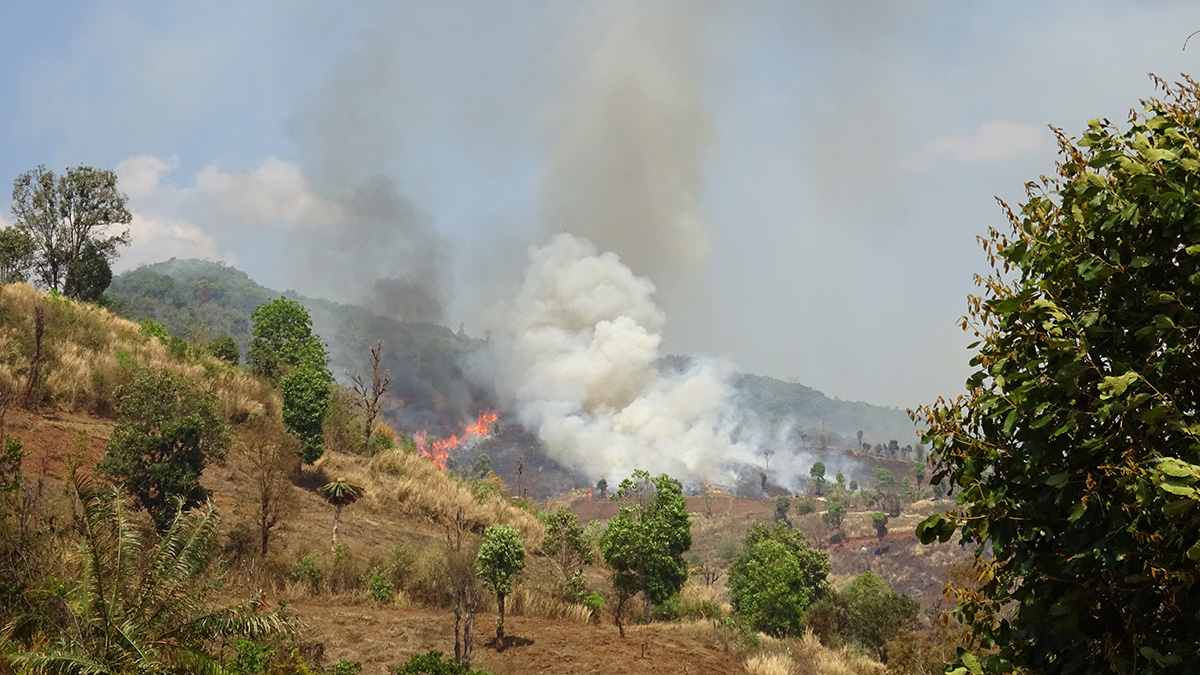 Slash-and-burn agriculture in Laos