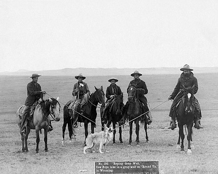 Old West Cowboys Roping Wolf 1887 Photo Print For Sale