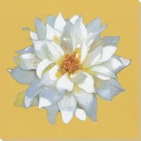 Spring Blossom Flower Yellow Wrapped Canvas Giclee Art ...