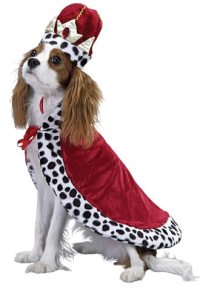 Royal King Dog Costume | King Costumes | brandsonsale.com