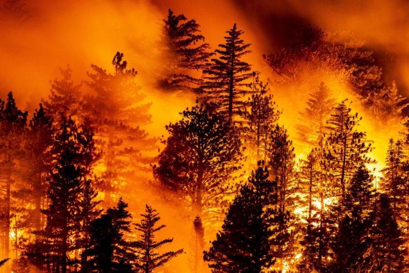 O incêndio, batizado de Bobcat Fire (menção ao gato selvagem, que pula de um lugar para o outro), atinge a Floresta Nacional, de Los Angeles e de San Bernardino.