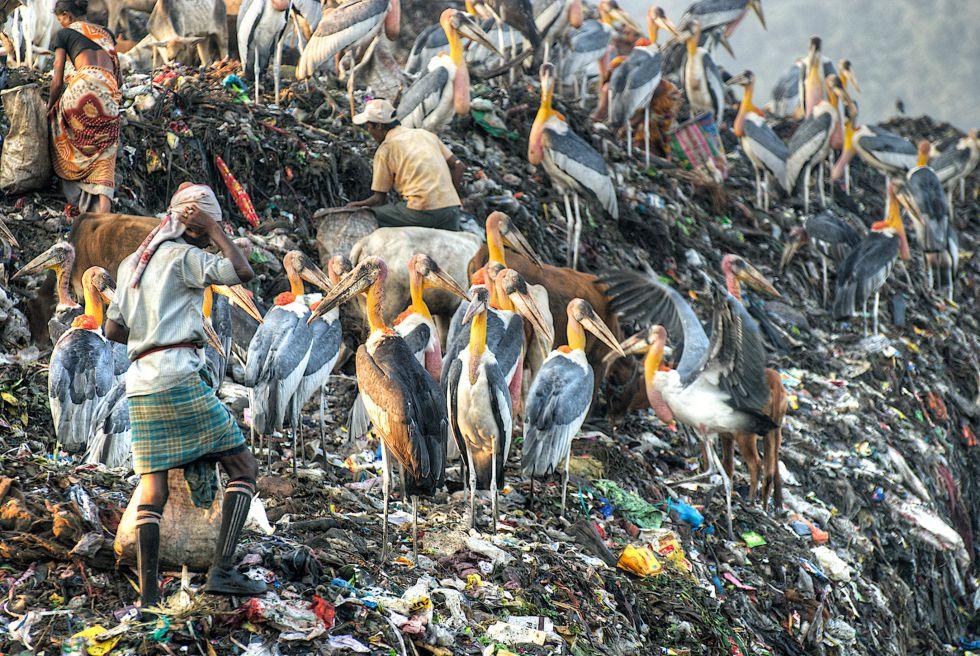 Marabúes argala y humanos en un vertedero de la ciudad india de Guwahati.