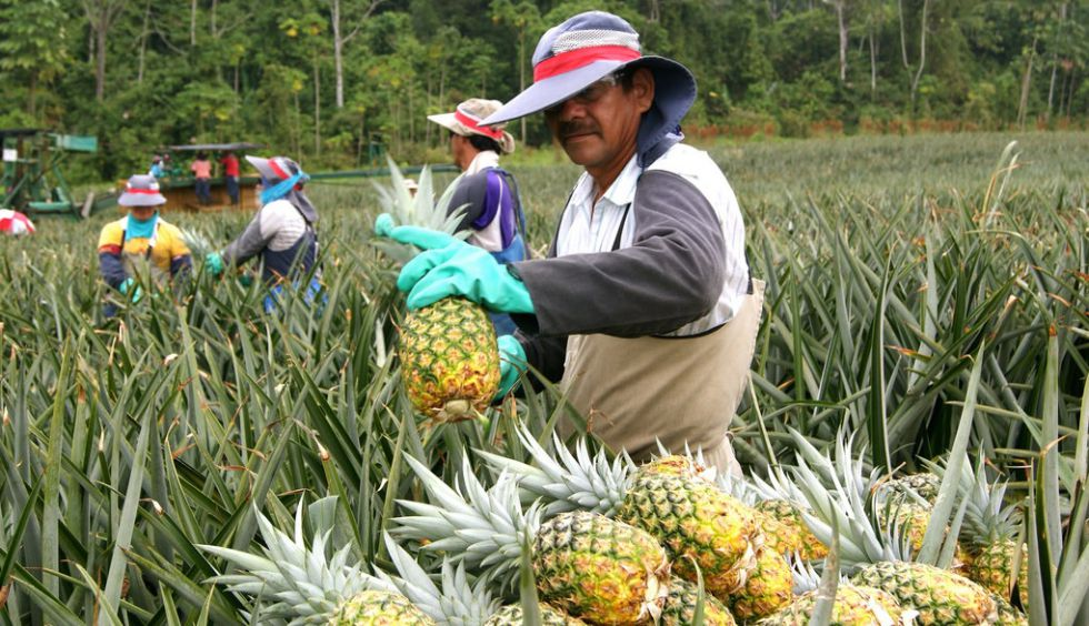 Resultado de imagen para agricultores de piña costa rica