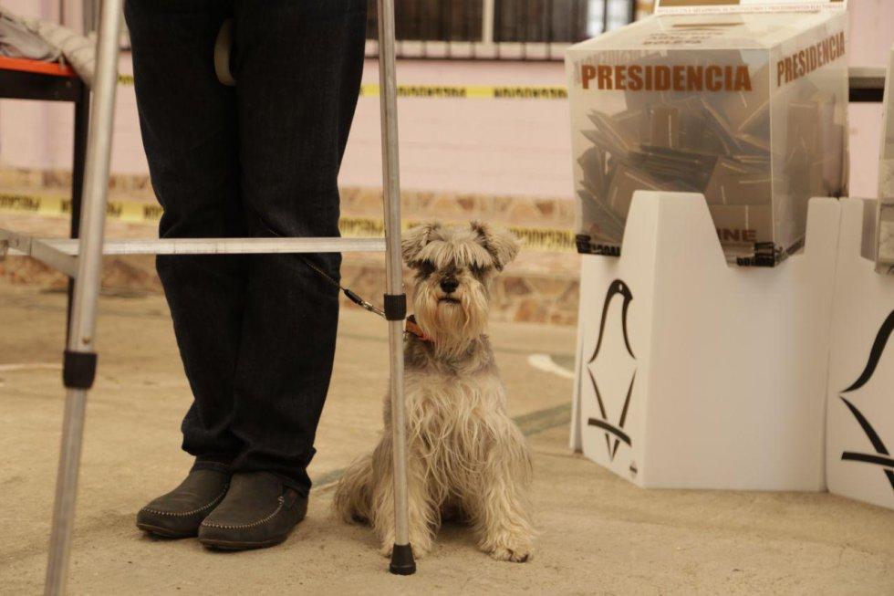 Una señora mayor acudio a votar con su mascota.