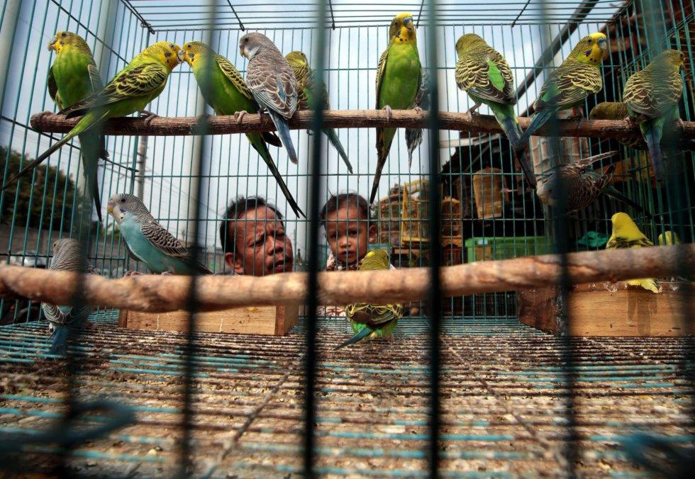 Un padre y su hijo eligen pájaros en un mercado en Depok, Java Occidental (Indonesia).