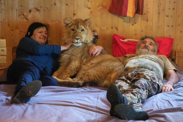 Simba, un león de nueve meses, posa en la habitación de Dominique y Juliette Cases, propietarios de un pequeño zoológico privado en Casteil (Francia), el 27 de abril de 2018.