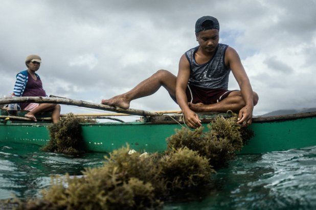 Un pescador trabaja en su plantación de algas. Actualmente, esta actividad ocupa unas 1000 hectáreas en la bahía de Taytay.rn