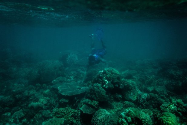 Un miembro de la patrulla marina municipal (Bantay Dagat) inspecciona el estado del coral en la zona protegida. El coral se ha ido recuperando desde el último episodio de blanqueamiento en 2010.